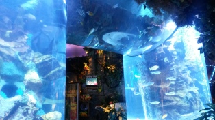 Rainforest Cafe, Mall of America, MN